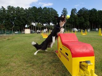 栃木・那須高原で愛犬とアウトドアで遊びまくる!大規模ドッグイベントが4月16~17日に初開催